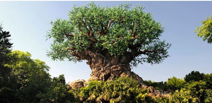 Magic of Animal Kingdom