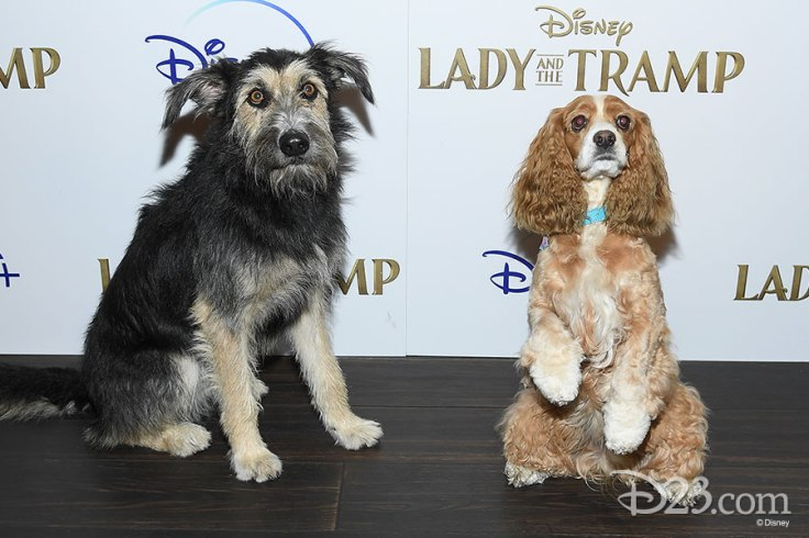 102319_gallery-lady-and-the-tramp-1