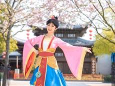 Mulan Shanghai Cherry Blossom