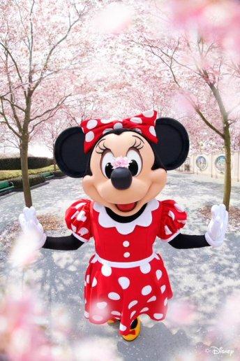 Minnie Mouse Shanghai Cherry Blossom